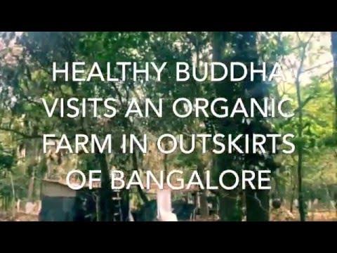 Healthy Buddha Visits an Organic Farm