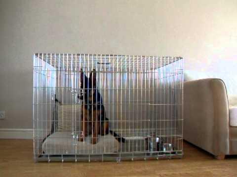 Yoko German Shepherd Crate Cage Training Owczarek