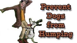 Humping - How to prevent humping using positive methods.