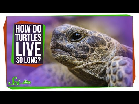 How Do Turtles Live So Long?
