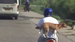 Dog Standing On The Back Of A Moving Motorbike