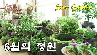 SUB) 6월의 베란다 정원에 핀 꽃들 구경하세요, 야…