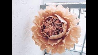 Большой цветок с необычной серединкой.
