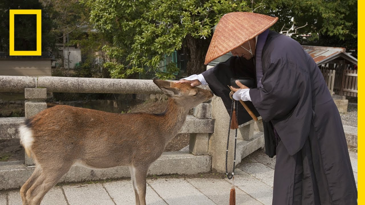 The World's Largest Wooden Temple is Surrounded by Wild Deer