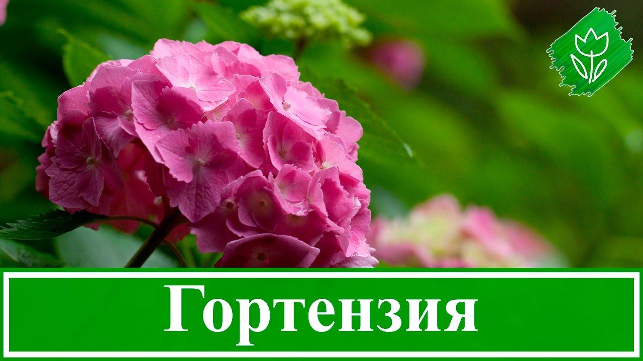 Цветы на улицах Москвы 2/ Flowers on the streets of Moscow 2 - YouTube