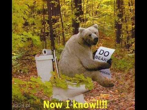 Медведь срет фото