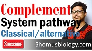 Complement system | classical and alternative pathway of complement activation