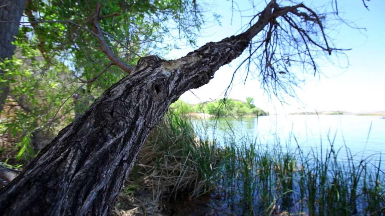 Видео в згурицком парке фото 353-974