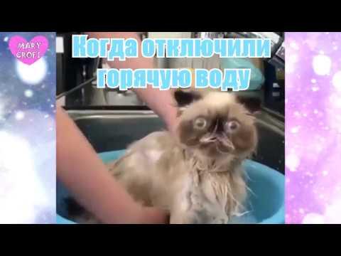 КОГДА ОТКЛЮЧИЛИ ГОРЯЧУЮ ВОДУ / Кот в шоке, пес кайфует, говорящий кот, кот в ванной
