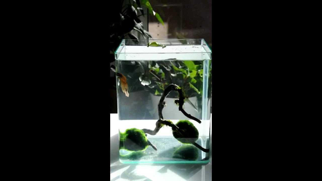 betta fish tanks 60l posted by shil on avforums aqua one aquanano 60l cube tank 4 rumney 2017. Black Bedroom Furniture Sets. Home Design Ideas