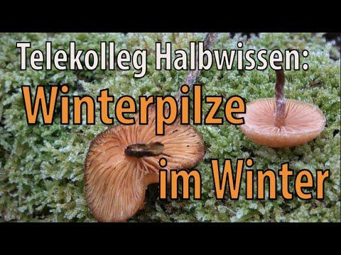 Telekolleg Halbwissen: Winterpilze