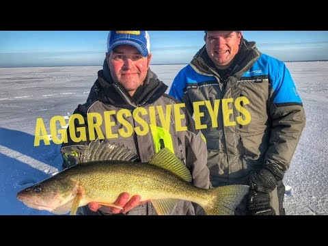 Ice Fishing WALLEYE (Red Lake - Crazy Aggressive Walleye) #catchcleancook