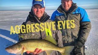 Ice Fishing Walleye (Red Lake - Crazy Aggressive Walleye)