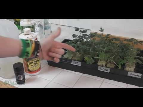 How to: Maintain Clones (For Fast Roots)