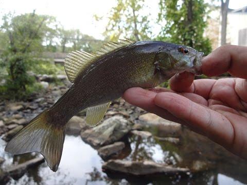 Fishing The Creeks Below The Churchville Reservoir (Northampton Township, PA)