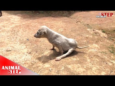 Rescuers Travel Over 199km to Rescue Little Injured and Sick Puppy