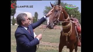 Qalampir.uz - Туркманистон Президенти Шавкат Мирзиёевга совға қилган зотдор от қаерда?