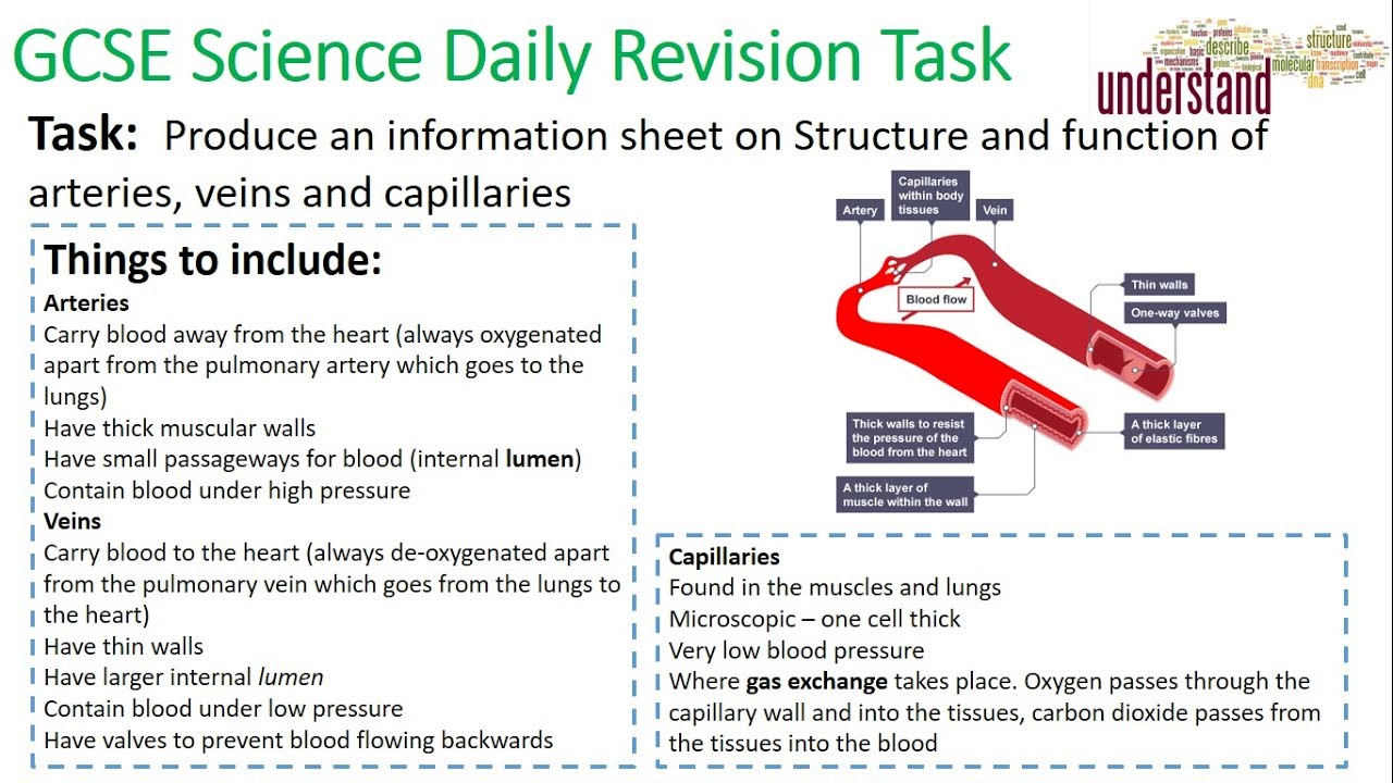 GCSE Science Daily Revision Task 20:  Blood vessels - YouTube