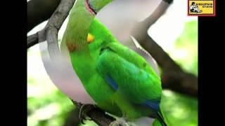 Salil Chowdhury | Bulbul Pakhi Maiana | Antara Chowdhury | Bengali Nursery Song