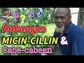 WAGU Pak Ndul - HUBUNGAN MICIN-CILLIN DENGAN CABE CABEAN