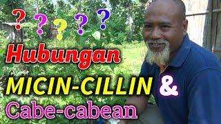 WAGU Pak Ndul - HUBUNGAN MICIN-CILLIN DENGAN CABE CABEAN MP3
