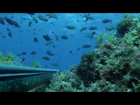Hocine Mimoun le GRAND BLEU Chasse sous Marine Algerie 2015