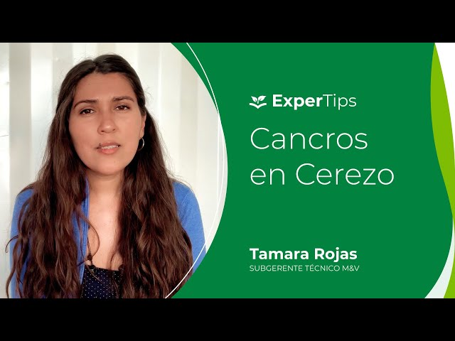 Expertips: Cancros en Cerezo