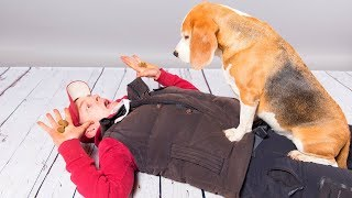 """what A Beagle Needs"" How To Take Care Of A Beagle With Cute Dog Louie"