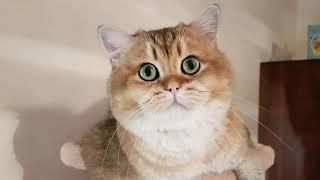 Самые большие глаза у кота!!!!