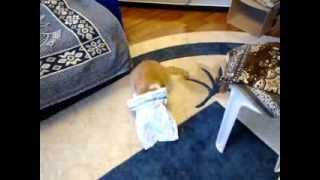 Слепой рыжий кот успешно паркуется в гараж)