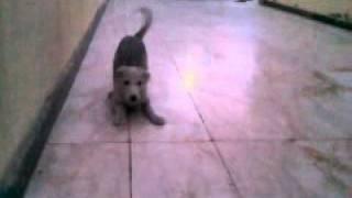 My Husky & Golden Retriever Mix