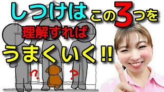 【犬しつけ トイレ 甘噛み】しつけはこの3つを理解すればうまくいきます!新!遠藤エマチャンネル【犬のしつけ@横浜】