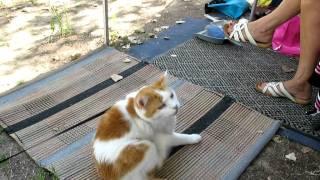 "Cat camping ""Rene Oltra"" Naturist ""Cap D'Agde"""