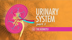 hqdefault - Diseases Of The Kidney And Urinary Tract.pdf