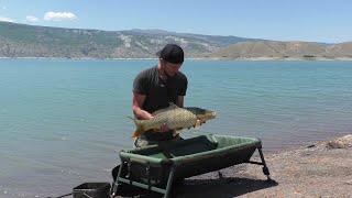 Ловля дикого сазана в завоз В поисках трофея Чиркейское водохранилище