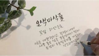 공기정화식물키우기 6. 오색마삭줄 / 캘리그라피 손글씨…