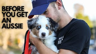 One Thing To Know Before Getting An Australian Shepherd