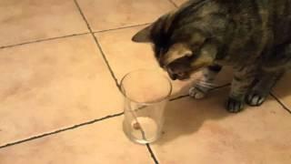Как определить левша или правша ваш кот