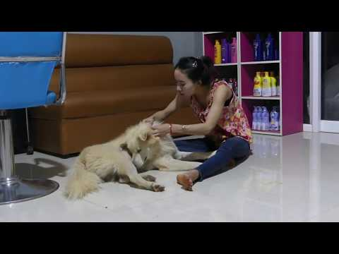 LOVELY SMART GIRL PLAYING BABY CUTE DOGS AT HOME HOW TO PLAY WITH DOG & FEED BABY DOGS #108