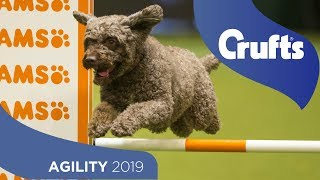 Blink and you'll miss it! Agility is back at Crufts 2019
