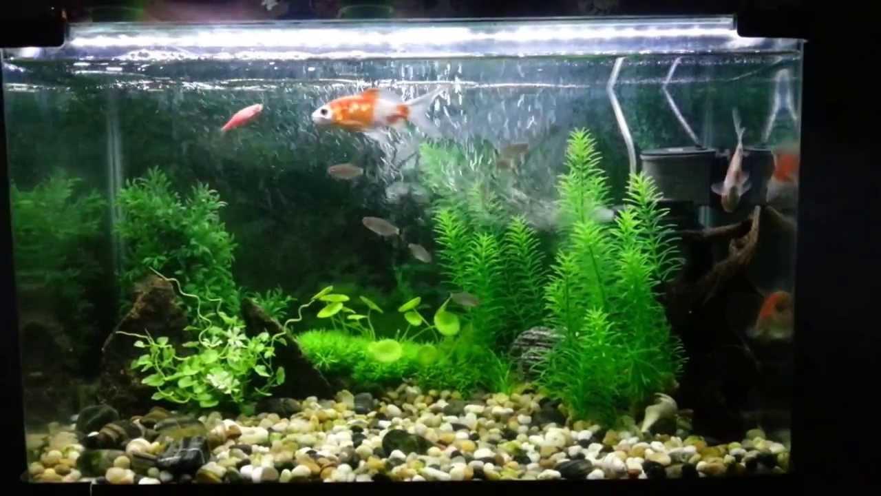 Decorating Aquarium With Artificial Plants   Decoratingspecial.com
