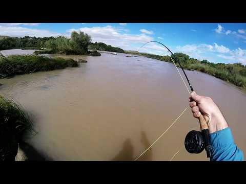 Fly Fishing Yellowfish In South Africa . Orange River 2018!