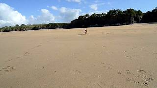 Border Terrier Catches The Frisbee