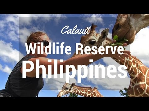 Calauit Wildlife Reserve Philippines A Piece of Africa Divergent Travelers