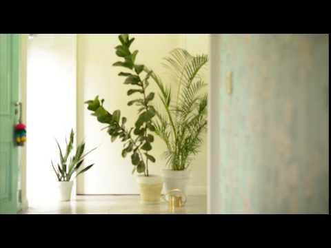 Quiero una selva en el living