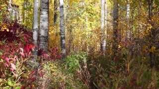 Relaxing HD Rustling Autumn Leaves 1 Hour White Noise