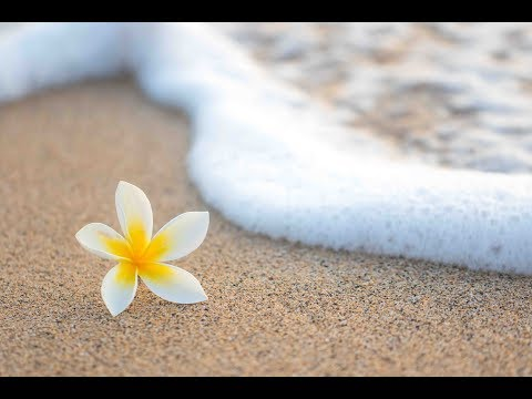 """Peaceful Music, Relaxing Music, Instrumental Music, """"Softly to the Sea"""" by Tim Janis"""
