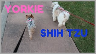 WALK MY DOGS WITH ME / NOT A GOOD IDEA