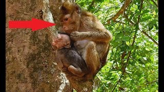 Nasty Old Thin Mom Pluck hair baby Lori| Poor baby hurt Cry Loudly, Why Mom not Pity Baby.