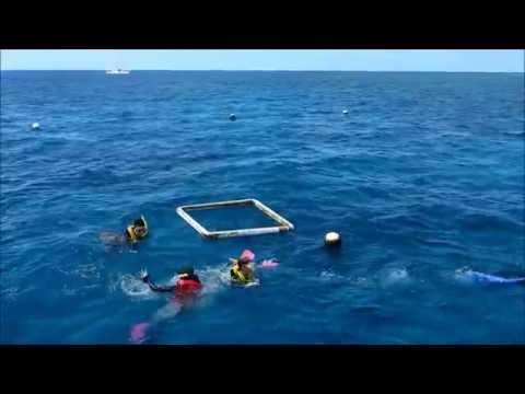 Cairns Great Barrier Reef Adventure